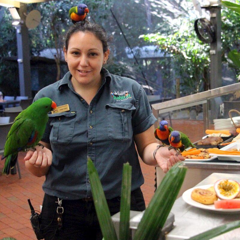 Breakfast with the birds Cape Tribulation tour