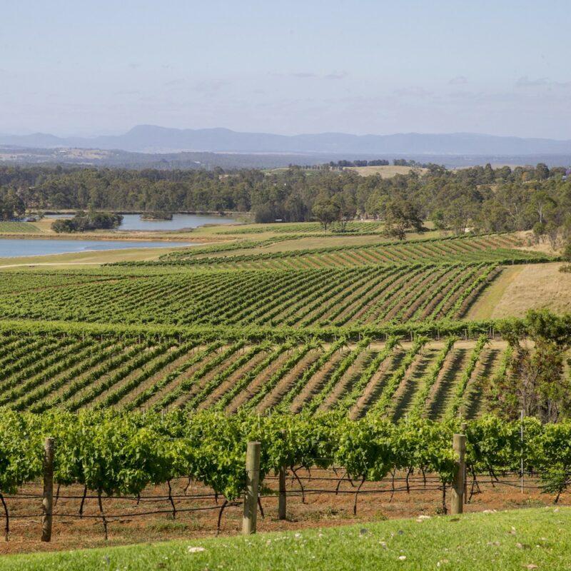 Hunter Valley vines