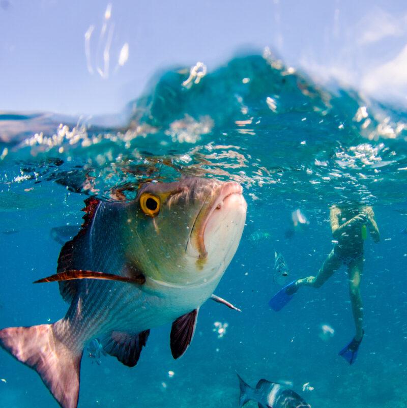 Deep sea divers den fish