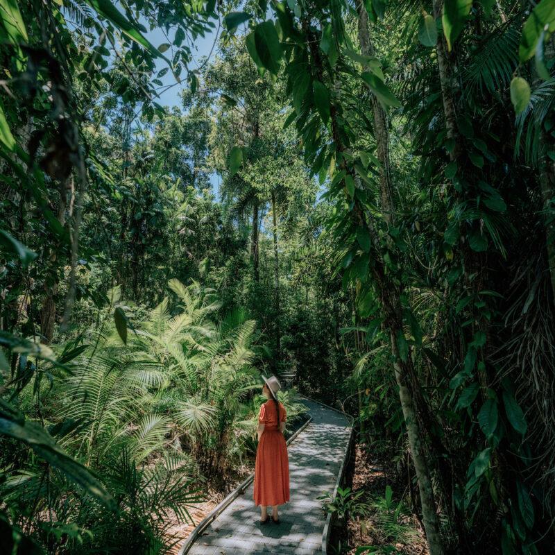 Looped walking trail through the Daintree Rainforest
