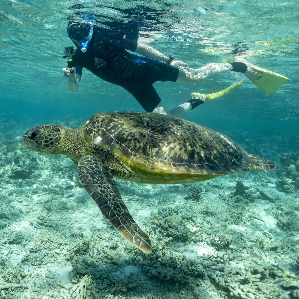 CORAL COAST CORAL BAY TURTLES